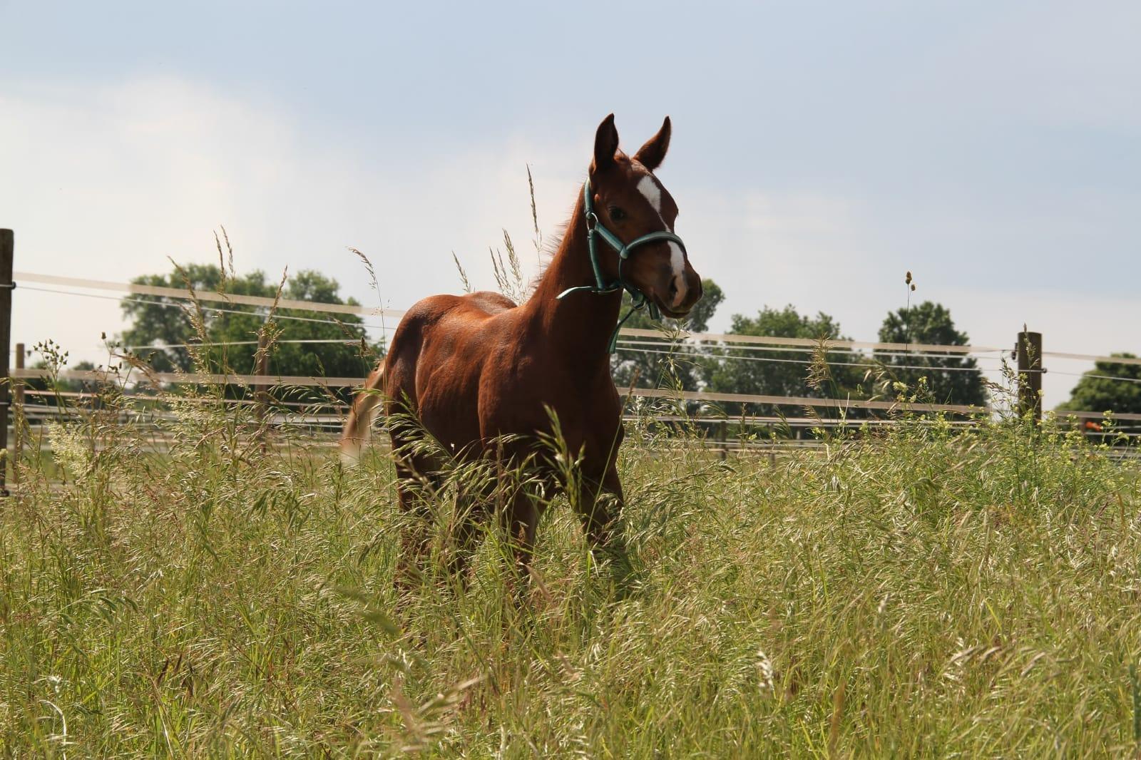 Pferd-Johnny-Verkauf-3